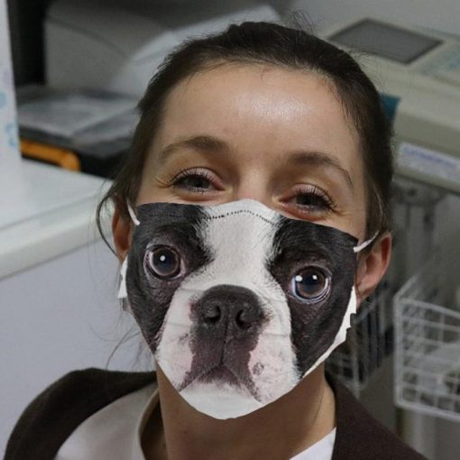 Boston Terriers Cloth Face Mask banner
