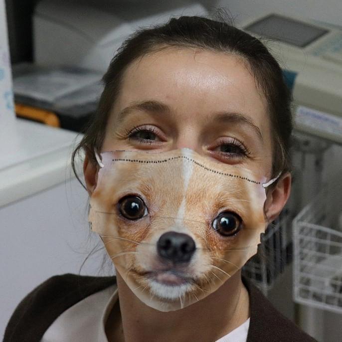 Chihuahua 3D cloth face mask