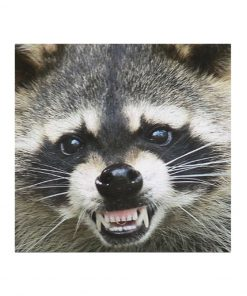 Raccoon Smile face mask2