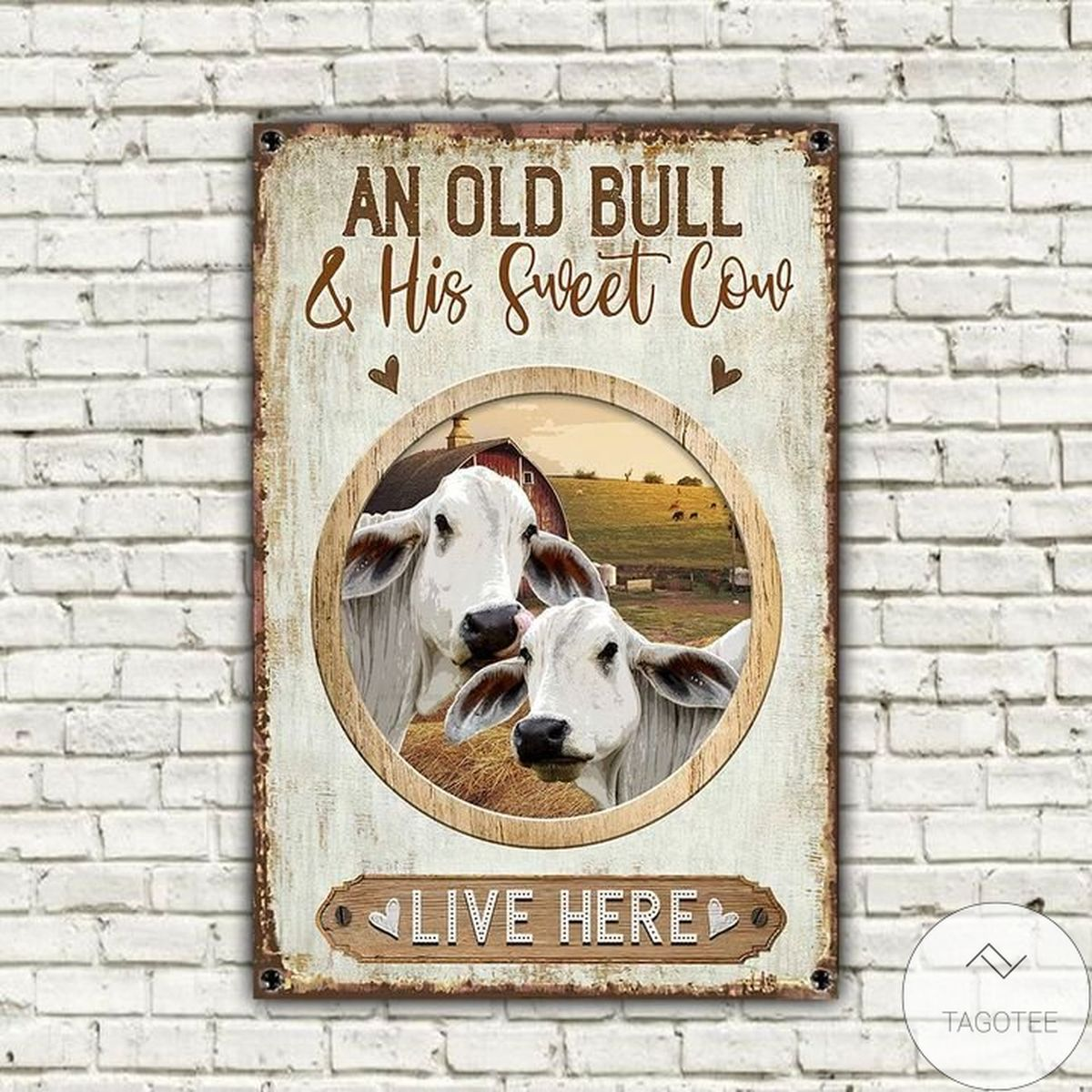 Review Brahman Cattle Old Bull And Sweet Cow Live Here Metal Sign