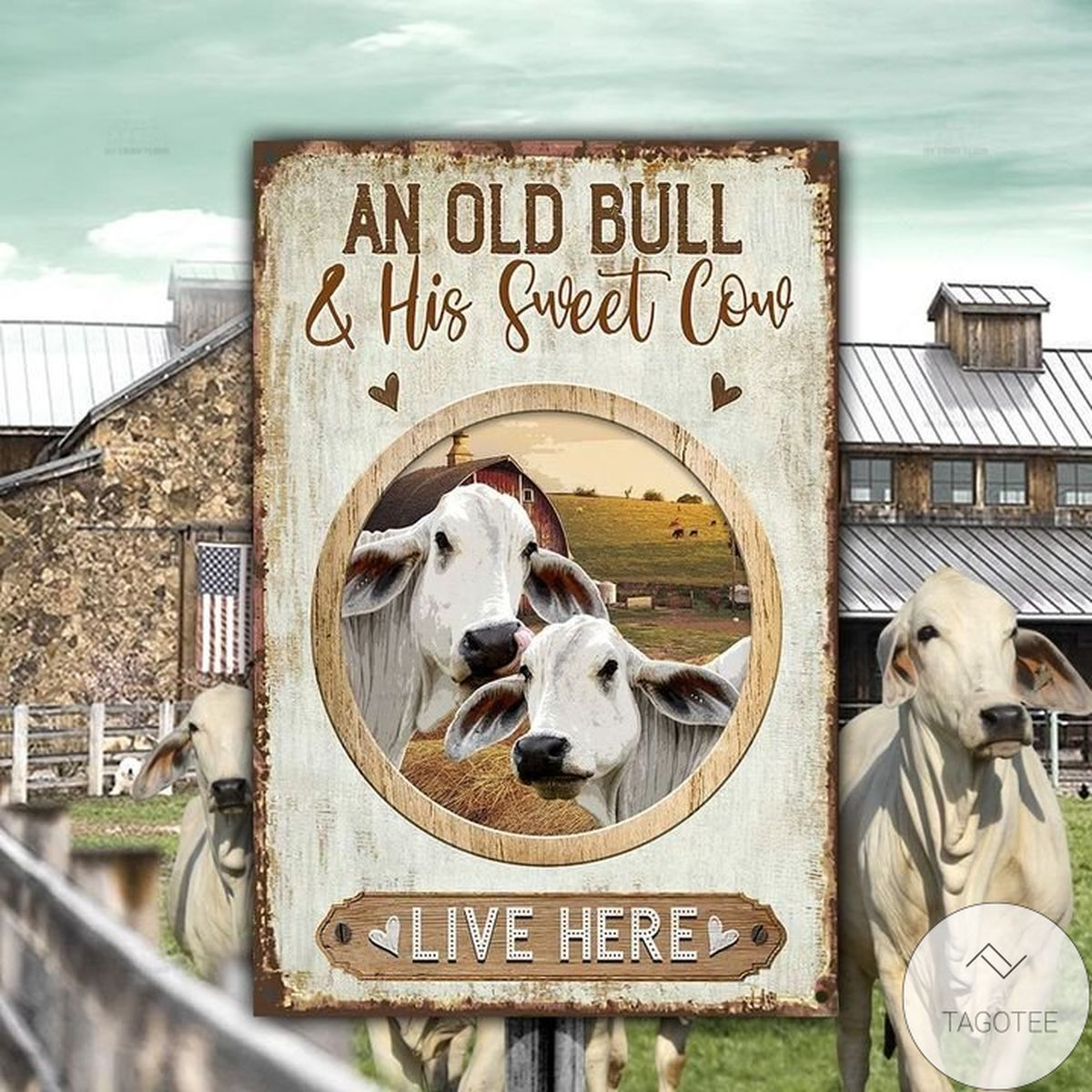 Brahman Cattle Old Bull And Sweet Cow Live Here Metal Sign