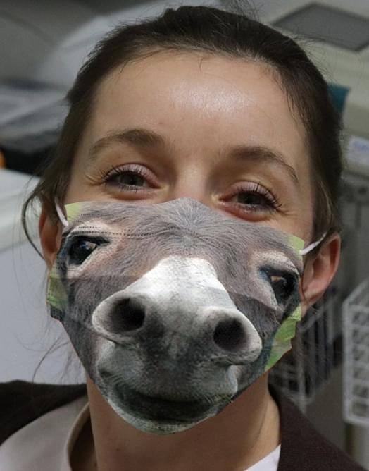 Donkey 3D face cloth mask